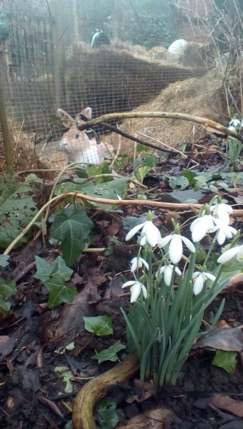 Fern and the Snowdrops