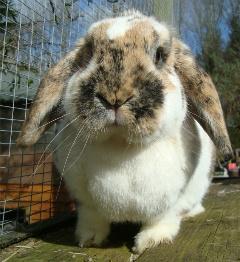 melodyrabbit